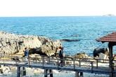 Du khách rơi xuống biển khi chụp hình ở Ninh Thuận