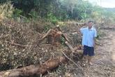 Kiên Giang: Cần ngăn chặn hành vi phá hoại tài sản của người dân