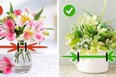 Chỉ cần nắm được 9 mẹo nhỏ này, những bông hoa trong nhà bạn lúc nào cũng tươi