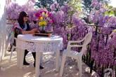 Khu vườn hoa hồng rộng hơn 1 hecta đẹp như cổ tích của người phụ nữ sinh ra ở Đà Lạt