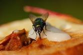 """Bọn ruồi sẽ """"dạt nhà"""" đi luôn với độc chiêu đuổi ruồi quá hiệu quả này"""