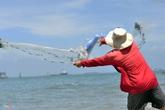 Chỉ ném đá lùa cá vào bờ cũng kiếm tiền triệu mỗi ngày