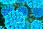 Nhiễm virut viêm gan siêu vi B có đáng lo?
