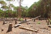 Đại biểu Quốc hội: Chạy dự án thủy điện để... khai thác gỗ?