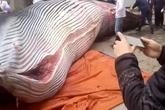 Công ty xẻ thịt cá voi 8 tấn để thưởng Tết cho nhân viên