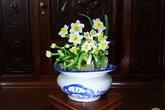 Chàng trai yêu hoa hướng dẫn cách tạo bình hoa thủy tiên đẹp dịu dàng đón Tết