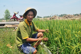 9X từ nằm đất, ăn mì gói… trở thành ông chủ 400 công đất trồng lúa sạch