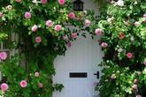 Ngất ngây vẻ đẹp của những cổng nhà tràn ngập hoa