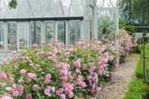 """Khu vườn hoa hồng đẹp hơn cổ tích của người đàn ông được phong là """"Vĩ nhân hoa hồng của thế giới"""""""