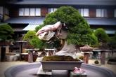 """5 """"siêu cây cảnh"""" hiếm có nhất hành tinh: Cây ở Nhật sống sót qua cả thảm họa bom hạt nhân"""
