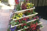 Không cần là người làm vườn giỏi bạn vẫn có thể trang trí sân vườn ấn tượng như thế này