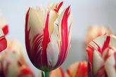 Bạn sẽ không thể tưởng tượng được giá của 5 loài hoa này