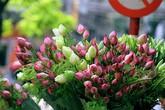"""Mách chị em mẹo chọn hoa sen cực chuẩn, đừng để """"mua nhầm quỳ mà bị hét giá sen"""""""