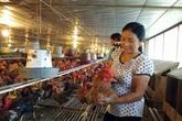 Ngày 20/10, gặp 3 nữ nông dân siêu giàu cho con du học Úc từ lợn gà