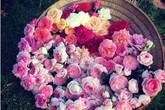 Khu vườn hoa hồng 2000 gốc gây thương nhớ cho bất cứ ai của chàng trai 9x ở Đồng Nai