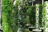 Khu vườn đầy ắp rau và hoa ngay trong nhà ga sân bay khiến ai cũng phải ngạc nhiên