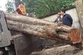 Cận cảnh cây sưa 200 tuổi giá 24,5 tỉ đồng ở Bắc Ninh