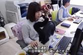 Công ty thưởng tiền cho nhân viên nuôi mèo