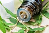 Tinh dầu tràm tốt cho sức khỏe như thế nào?