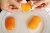 Trứng gà 2 lòng đỏ có nhiều chất hơn 1 lòng đỏ?