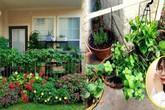 """Vườn rau mini đáng ngưỡng mộ của nữ du học sinh Y khoa ở nơi """"đất khách quê người"""""""