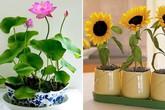 """Trồng ngay 7 loại hoa """"hộ mệnh"""" tháng cuối năm để hóa giải điều xấu cho gia chủ"""
