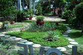 Chàng trai 9x ở Tây Ninh tạo vườn nhà đẹp như công viên mà không tốn đồng nào