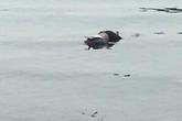 Quảng Ninh: Phát hiện thi thể người đàn ông gần bờ biển