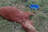 Thông tin mới nhất vụ 9 con bò chết bất thường ở Thái Bình