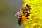 Thâm cung bí sử (156 - 3): Thuốc giải nọc độc ong lỗ