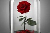 Hoa hồng vĩnh cửu giá chát vẫn gây