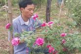 """U40 Ninh Bình """"liều mạng"""" cầm cố nhà cửa vì phải lòng hoa hồng cổ"""
