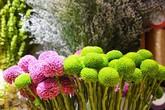 """Thị trường 20/10: Xuất hiện nhiều loại hoa có tên... """"lạ hoắc"""""""
