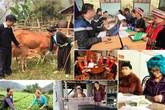 Mục tiêu cơ bản của các dự án thành phần thuộc Chương trình mục tiêu DS-YT giai đoạn 2016-2020