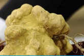"""Một khách hàng chi hơn 2 tỷ đồng để mua khối nấm cục chưa đến 1 kg nhưng bị cho là """"hớ"""""""