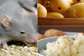 """Không cần tốn tiền, lũ chuột nhà bạn sẽ """"đột tử"""" sau 1 đêm chỉ với 3 củ khoai tây"""