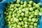 Kì lạ loại bắp cải to bằng quả chanh nhưng đắt gấp 30 lần bắp cải Việt Nam