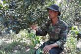 Đi lên từ vùng đất chết, lão nông thu hàng trăm triệu đồng từ cam sành