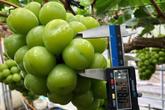 Trái cây cao cấp ngoại ồ ạt về Việt Nam