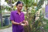 Thầy giáo cất công đưa lúa tím có mùi thơm hoa hồng vào chậu... trưng Tết