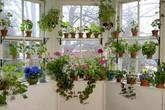 Trang trí cửa sổ đẹp lãng mạn để năm mới tươi vui, hạnh phúc