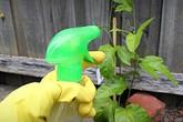 Đâu cần phải mua hóa chất độc hại, nhà bạn có sẵn những loại thuốc trừ sâu cực hiệu quả mà lại rất an toàn