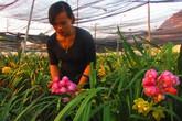 Nữ chủ nhân đổi đời nhờ vườn địa lan ngàn chậu trên cao nguyên