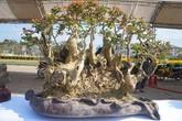 """La liệt bonsai độc lạ giá cả cây vàng """"đại náo"""" thị trường Tết 2018"""