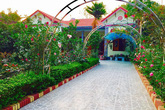 Hoa hồng ngập lối vào ngôi nhà của cô giáo dạy Toán ở Thanh Hóa