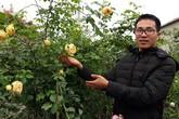 """Kỹ sư điện tử thất nghiệp về trồng hoa hồng ngoại """"bỏ túi"""" 100 triệu/năm"""