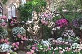 Những ý tưởng làm đẹp sáng tạo khiến sân vườn rộn sắc xuân