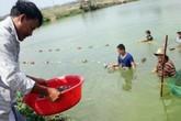 Lão nông chịu chơi, nhập cá giống cả 1000USD về nuôi để không đụng hàng
