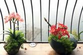 Những chậu hoa lạ trên sân thượng của nữ giám đốc Hà Nội