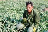 Xuất khẩu dưa hấu sang Trung Quốc: Dưa chín vẫn chưa thấy đối tác